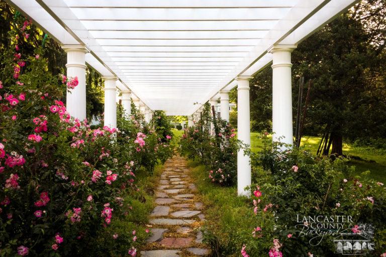 garden tunnel pergola